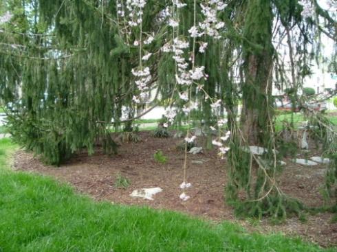 treegarden1