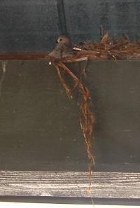 birdonrafter