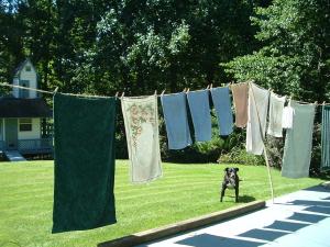 laundry w dog
